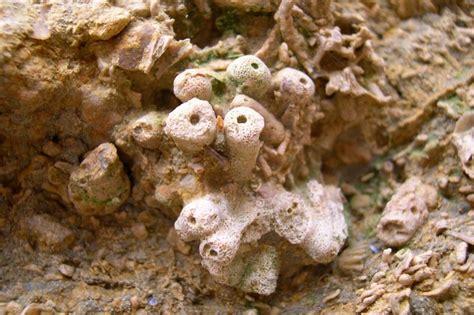 falaise du cap romain reserves naturelles de france