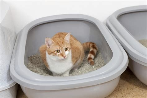 Cat Litter Box Otg Medium 10 ways to lavishly per your cat and purr happily