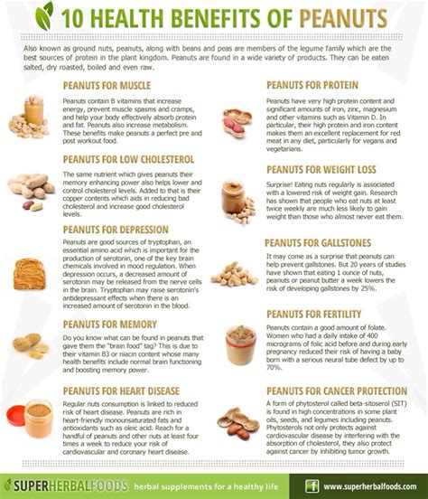 10 Health Benefits Of by 10 Health Benefits Of Peanuts Musely