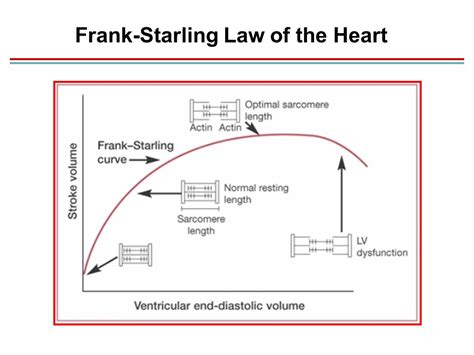 resistor de starling cardiac output blood flow and blood pressure ppt