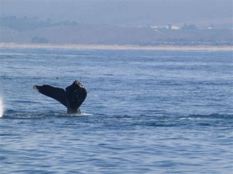monterey whale watching boats blackfin catamaran picture of monterey bay whale watch