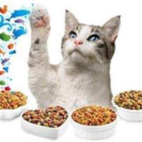 gattini alimentazione croccantini per gatti sterilizzati cibo gatti