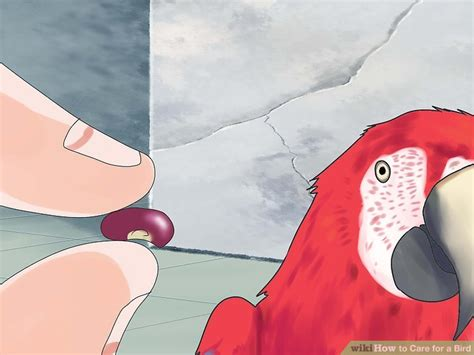how to care for a bird