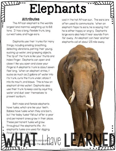 article information african animals informational article qr code research
