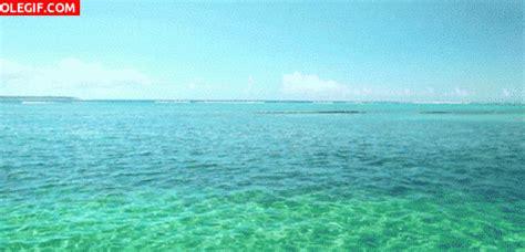 imagenes en movimiento del mar mar gif movimiento imagui