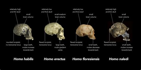 ape mind mind new mind emotional fossils and the evolution of the human spirit books the frequently overlooked geological context of hominid