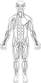 human muscles coloring human muscles coloring
