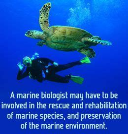 marine biology buzzle i want to save the turtles