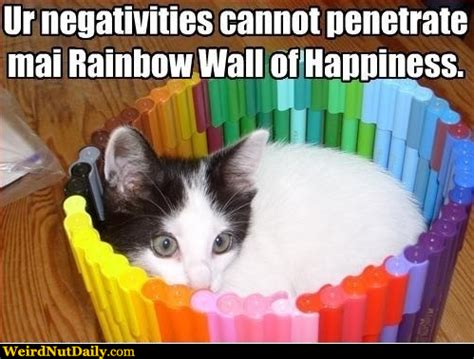 Gay Cat Meme - happy cat in rainbow meme generator captionator caption