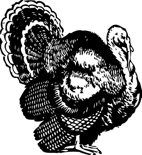 Black And White Thanksgiving Clipart turkey clipart black and white clipart best