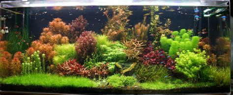 Tank Aquascape by 125 Gallon Freshwater Planted Tank Rainforest Concepts