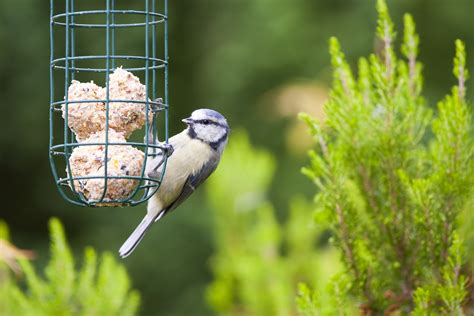 the benefits of feeding the birds