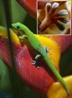 dari gurita berubah bentuk dan warna dan bahkan tekstur