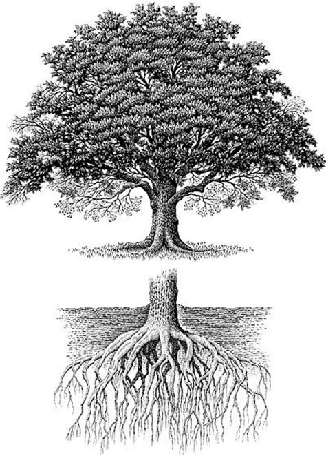 tree biography in english 18 best naked trees images on pinterest naked four