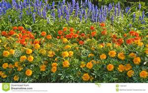 annual flowers stock image image 11852901