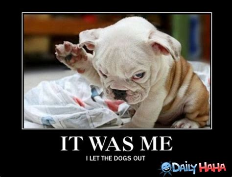Guilt Meme - guilty dog meme memes