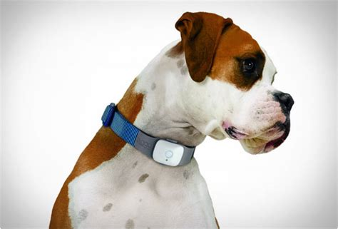 puppy tracker tagg the pet tracker