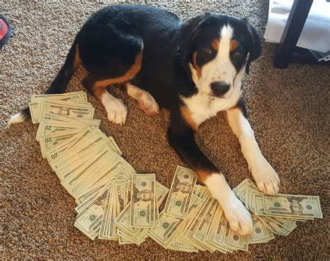 Win Money For The Rest Of Your Life - upvote money dog or you will have bank problems the rest of your life dogvirals com