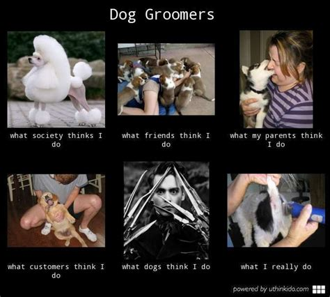 Dog Groomer Meme - 1000 images about groomer humor on pinterest