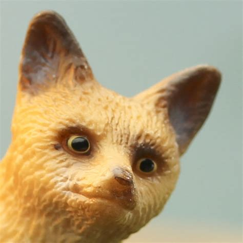 pygmy fox