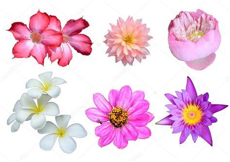 imagenes de varias flores selecci 243 n de varias flores aisladas sobre fondo blanco