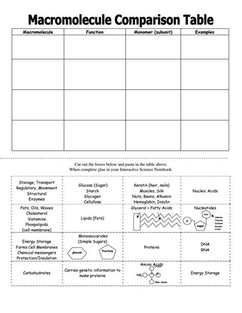 Macromolecules Worksheet by Macromolecules Chart Activity Pinteres