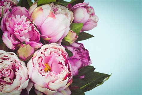 peonies bouquet peony bouquet how to create the display with