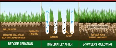 lawn aeration fertilization  victor ny john welch