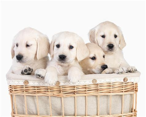 Puppies For Giveaway - wanted cute puppies for novipet puppy model giveaway ends 5 13