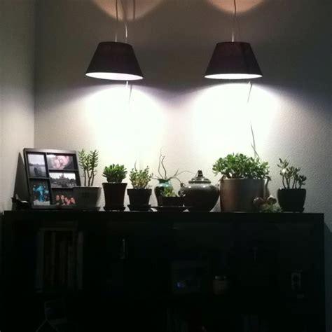 attractive grow lights  indoor plants phillips plant