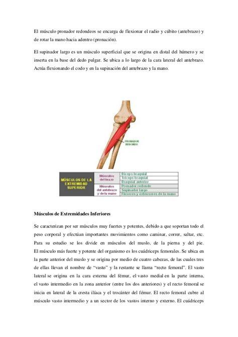 cadenas musculares de miembro superior pdf atractivo nombres musculares del cuerpo superior molde