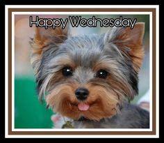 happy wednesday images   happy wednesday