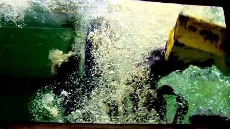 kewi boten zwarte piet valt tussen wal en schip kewi nl youtube