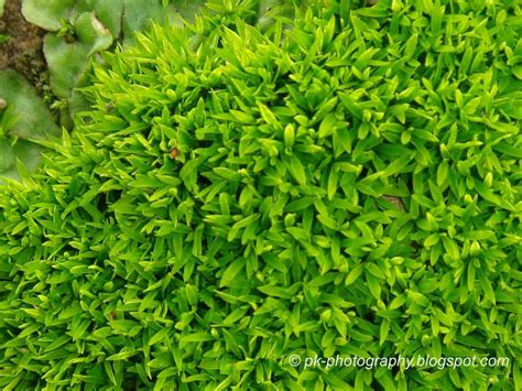 moss plants nature cultural and travel photography blog