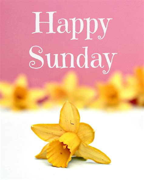imagenes good morning happy sunday happy sunday pictures photos and images for facebook
