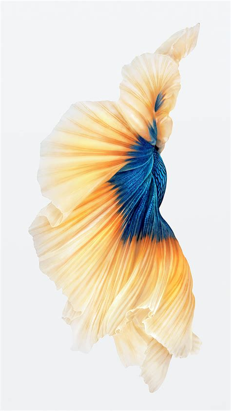 wallpaper iphone 6s hd fish consigue los wallpapers del iphone 6s y de ios 9 1 beta 3
