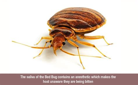 bed bugs los angeles bed bug dogs los angeles bed bugs exterminator bed