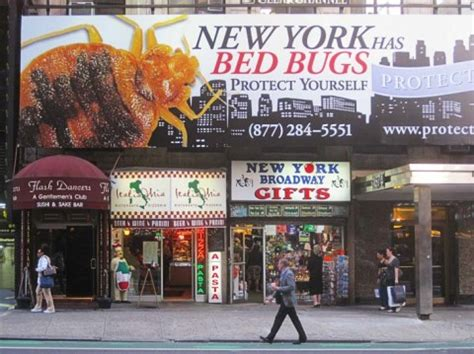 bed bug laundry nyc bed bugs northwest how do you get rid of bed bugs 80