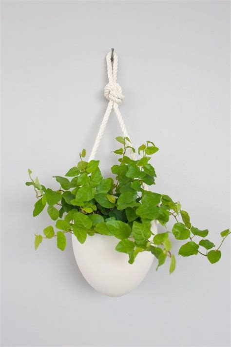Hanging Rope Planter by 17 Best Images About Terrarium On