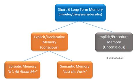 define memory organization in detail all in one tuts short term memory and long term memory memoryhealthcheck