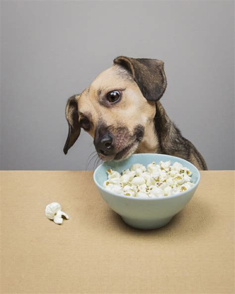 popcorn for dogs nutrition 5 healthy friendly human foods pawsh magazine