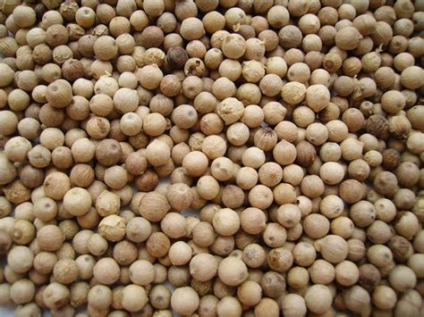 white pepper exporters of herbs medicinal plants morels and dried fruits