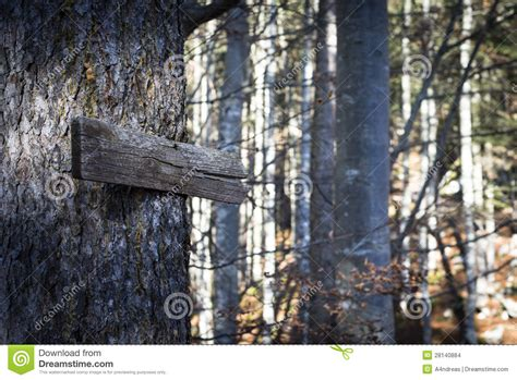 time trees directions wooden direction sign on tree stock images image