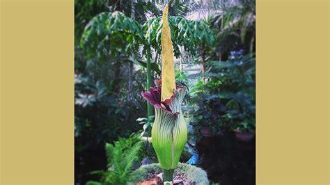 perdalam wawasan tentang flora lewat macam macam bunga