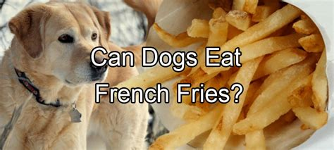 can dogs eat fries fries pethority dogs