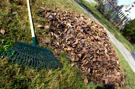 Landscape Rake Wiki File Leaf Rake And Leaves Jpg