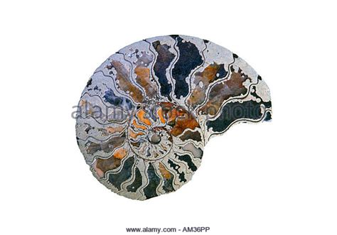 Fossil Cross Second by Zeitalter Stock Photos Zeitalter Stock Images Alamy