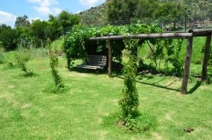Grape Vine Trellis For Sale Trellising Grapes At Home Catawba And Hannepoort Grape