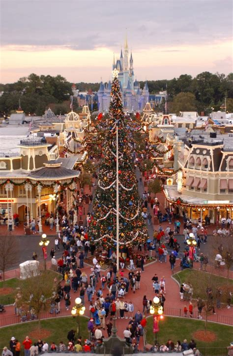 christmas trees at disney parks 171 disney parks blog