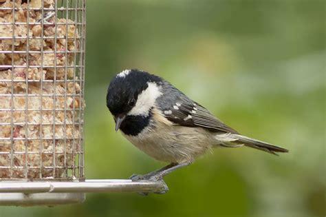 Nourrir Oiseaux Jardin by Mangeoire 224 Oiseaux Comment Nourrir Les Oiseaux De